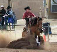 Performance Horses Reining